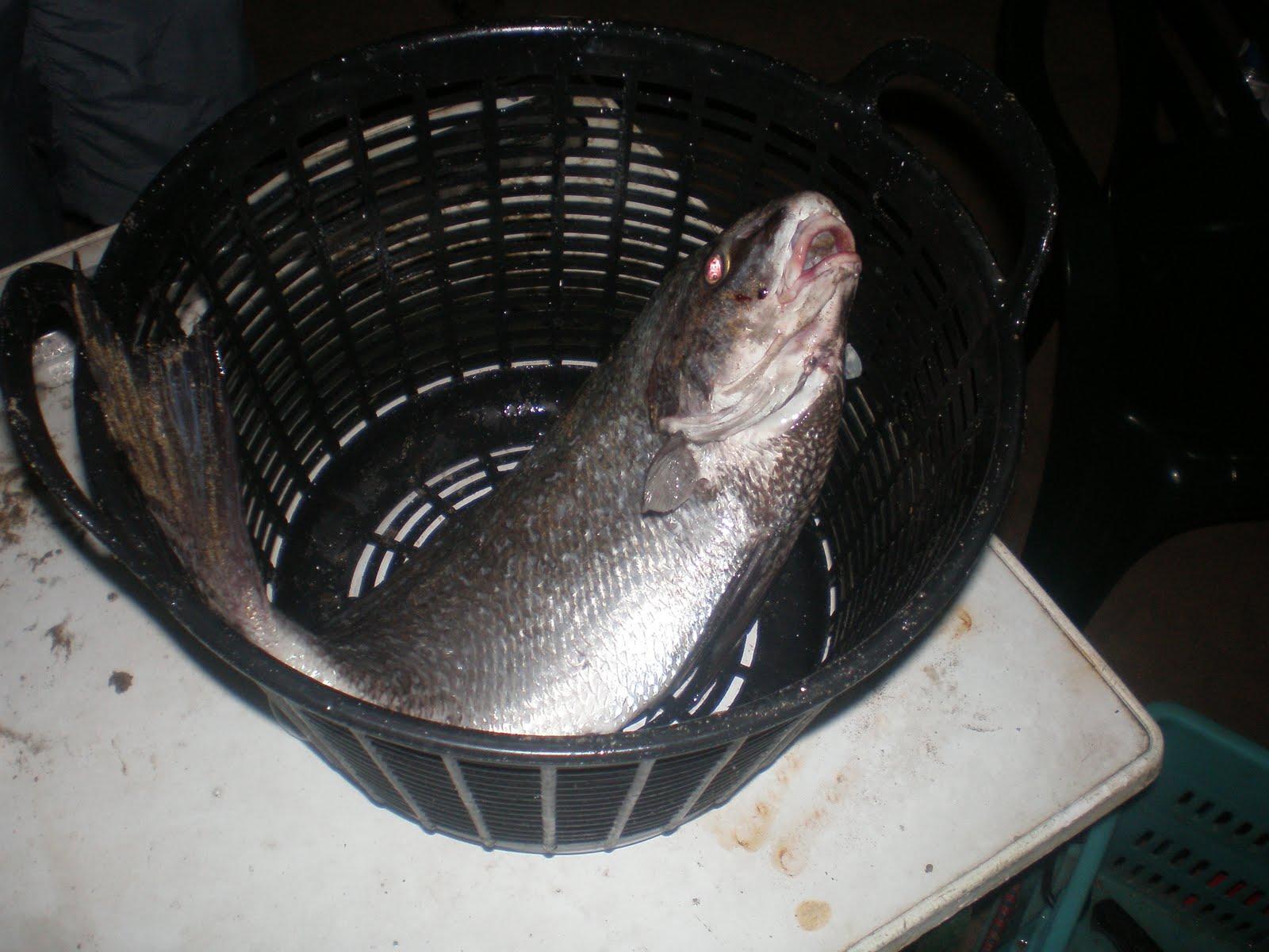 La pesca sobre el paso de jabalí