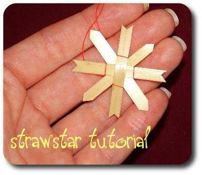 Picture of tiny strawstar