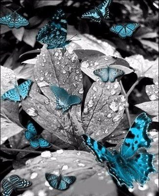 gosto de borboletas azuis