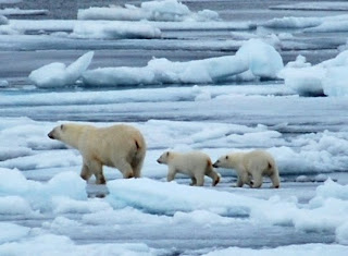 Changes to sea ice influence the Arctic's local weather, climate and ecosystems