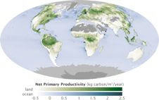 Global measurements of the carbon stored by plants (net primary productivity) during photosynthesis, based on MODIS data, are an important piece of the climate change puzzle