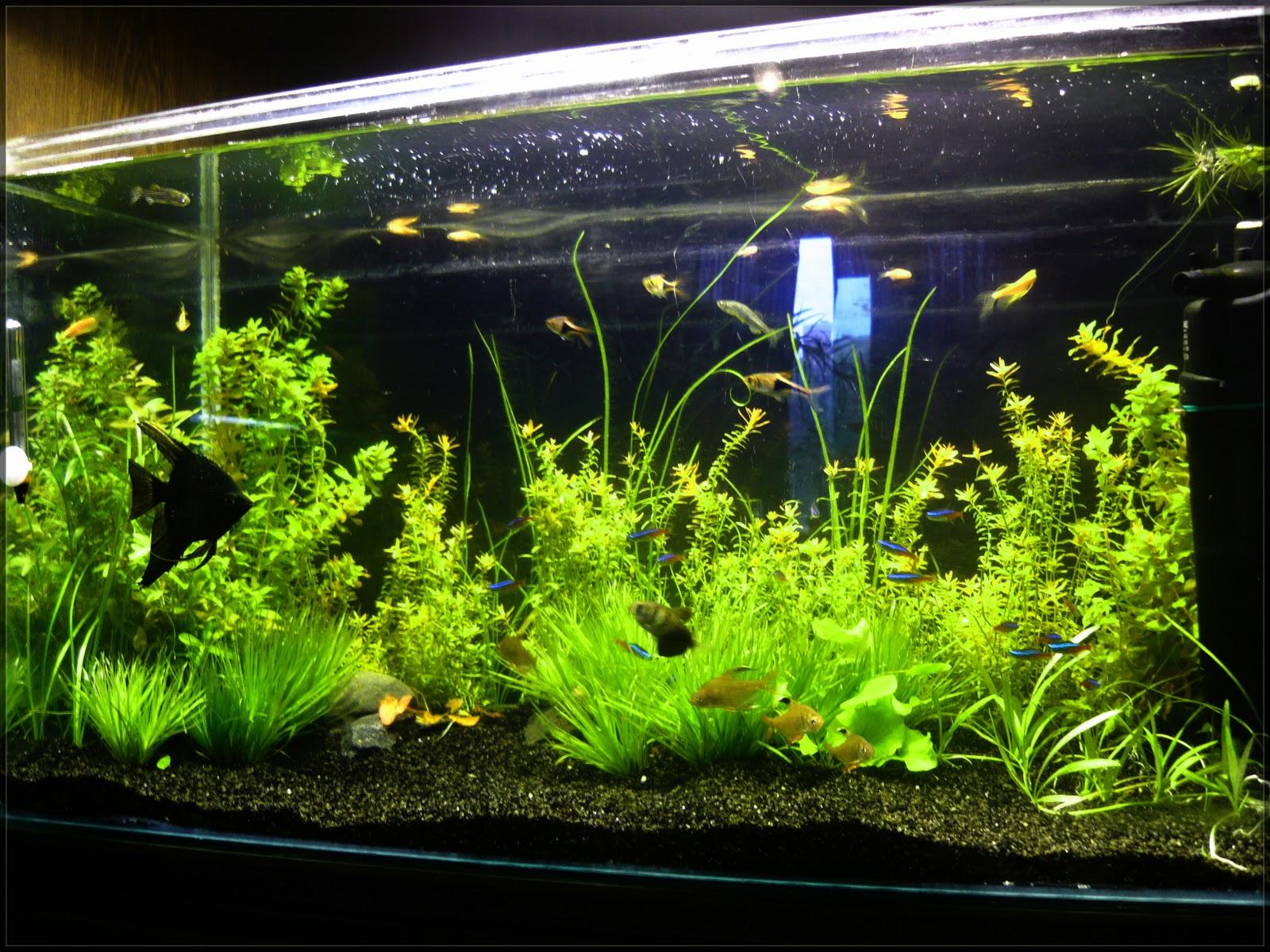 Посадка растений аквариум, правильная посадка аквариумных 48