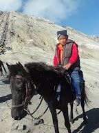 Gagas dan Kuda
