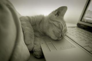 gatito geek durmiendo feliz con su ordenador