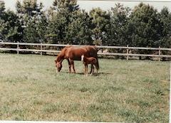 Skipa and Starlet, 1996