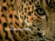 ANIMALES BONITOSANIMALES. DESCARGAR. Publicado por VIRGINIA en 14:26 (animales bonitos)