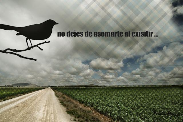 [el_campo_de_habas.jpg]