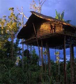 rumahpohonpapua Rumah   Rumah Indonesia Yang Unik!