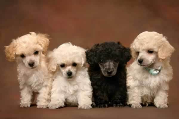 Texas Dogs and Puppies For
