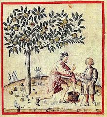 Castanea sativa (Chestnut)