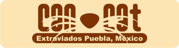 Animales extraviados (Puebla, México)