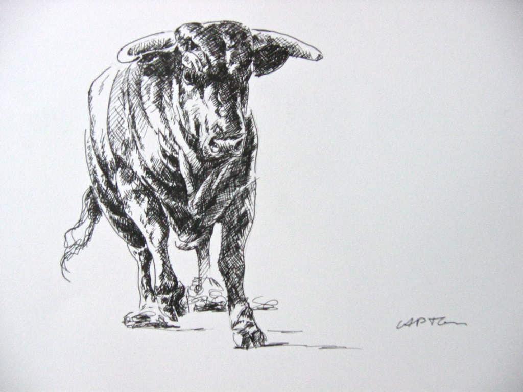 C a p t o n dessin de toro - Dessin de toro ...