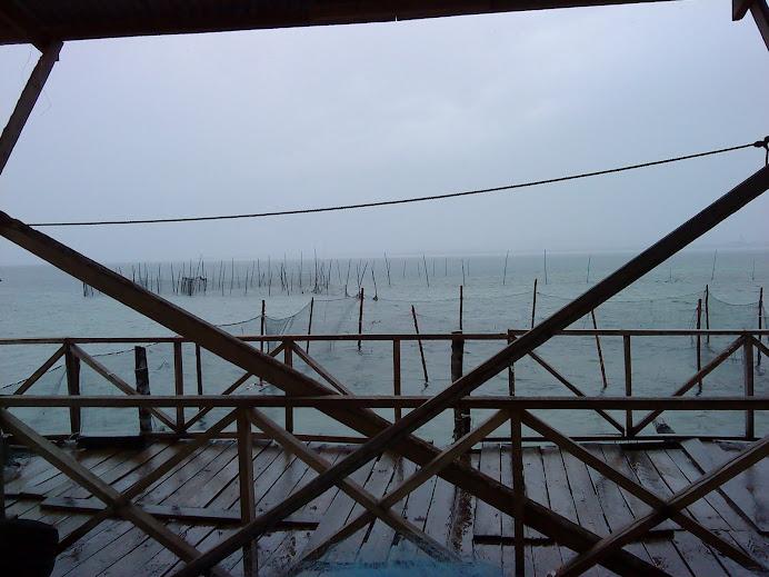 Rumpai laut