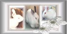 my bunnies Thumper Belle Eron