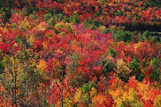 With the temperatures starting to drop, the brilliant Maine fall foliage is .