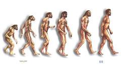 ¡LA EVOLUCIÓN ES FALSA!...