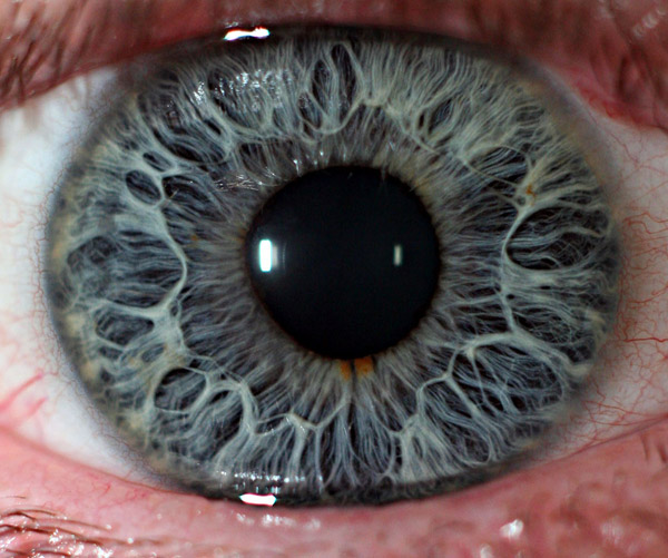 21 Extreme Close Ups of the Human Eye «TwistedSifter