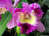 http://3.bp.blogspot.com/_U5DoDhtjN1Y/THSGm7w9DRI/AAAAAAAADEc/w3lGYNymbp0/s200/foto_de_flor_orquidea_03.jpg