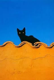 Μιλτιάδης Θαλασσινός (Μαύρος Γάτος)