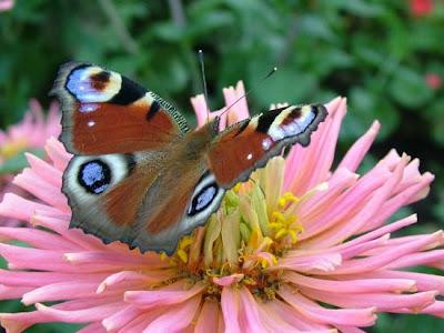 7art Fantastic Butterflies Pics