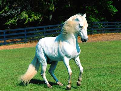 Cute White Horse Wallpaper