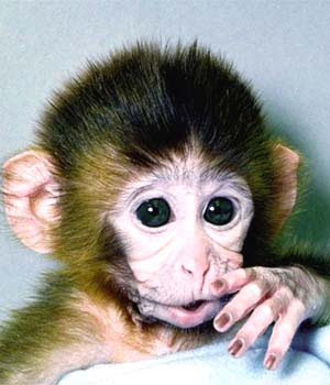 Cute Monkey Green eyes Pics
