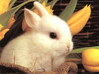 Cute Lovely Rabbit Picture