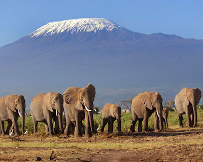Mount Kilimanjaro Africa Pics