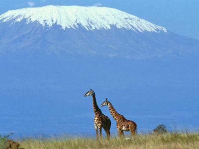 Mount Kilimanjaro Picture