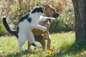 Some Idioms To Fight Like Cat And Dog