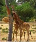 Friguia Zoo Park