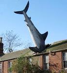 El tiburón Serrizuela
