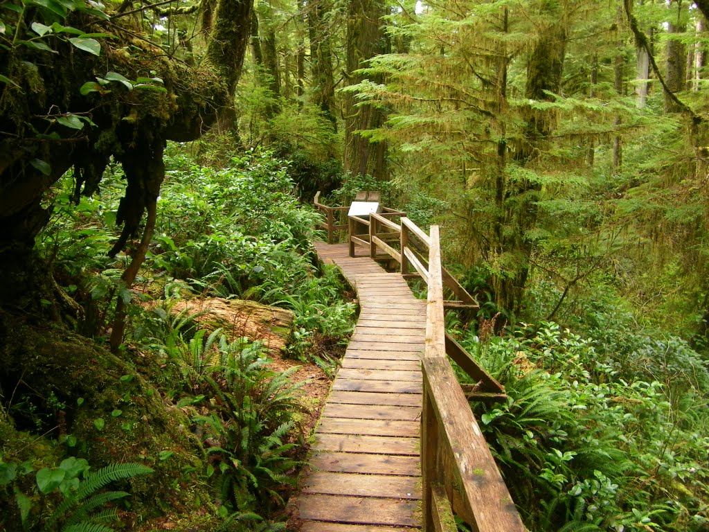 Radar Hill And Rainforest In Pacific Rim Np