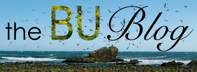 the bu blog