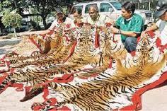 cazadores de tigres.jpg___www.odaalanaturaleza.blogspot.com