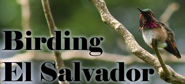 birding-elsalvador