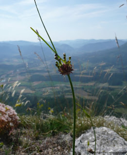 Vallée de la Drôme depuis le col du Royet