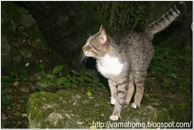 кошка вышла из леса