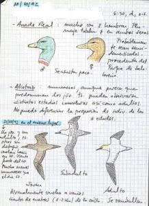 Ejemplo de cuaderno de campo de un ánade real