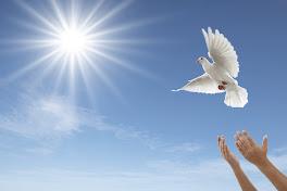 White Funeral / Memorial Doves