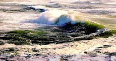 Alghe con forza dal fondo