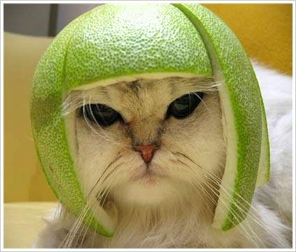 funny cat-31