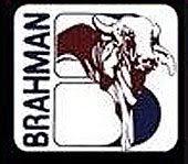 BRAHMAN - SUDAFRICA