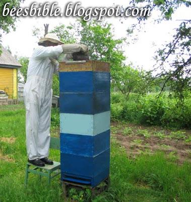 пчелиный улий