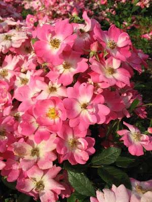 Самый красивый цветок