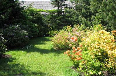дендрарий картинки, дендрариум, дендрологический сад, дендропарк, парк дендрарий, посадка роддендрона