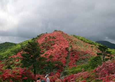 рододедрон японский, рододендрон фото, рододендрон растение, рододендроны сада