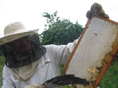 медогонка, мёд, осмотр пчёл, отъём мёда у пчёл, пчеловодство