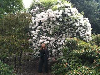 королевские ботанические сады Лондон, самый большой рдодендрон