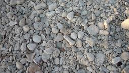 fósiles en la península de Ancón (Cuba)